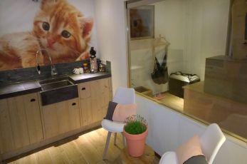 Gezellige ruimte kattenhotel In2Cats
